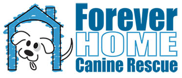 Forever Home K9 Rescue
